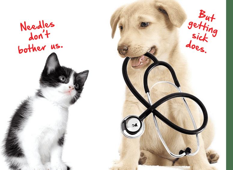 Reduced Cost Vaccine Clinic-Woodstock Veterinary Hospital